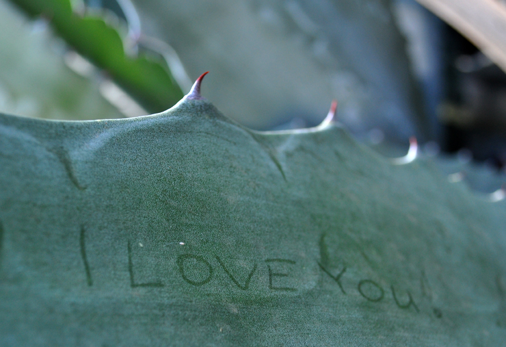 2/8/10-A sweet inscription on a thorny plant in the Royal Botanic Gardens in Melbourne, Australia. Photo by Bobbi Lee Hitchon