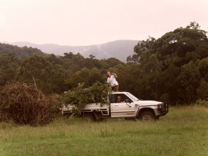 Lise, in the driver's seat and I, on top of the ute, unloading the last of the lantana. Photo provided.