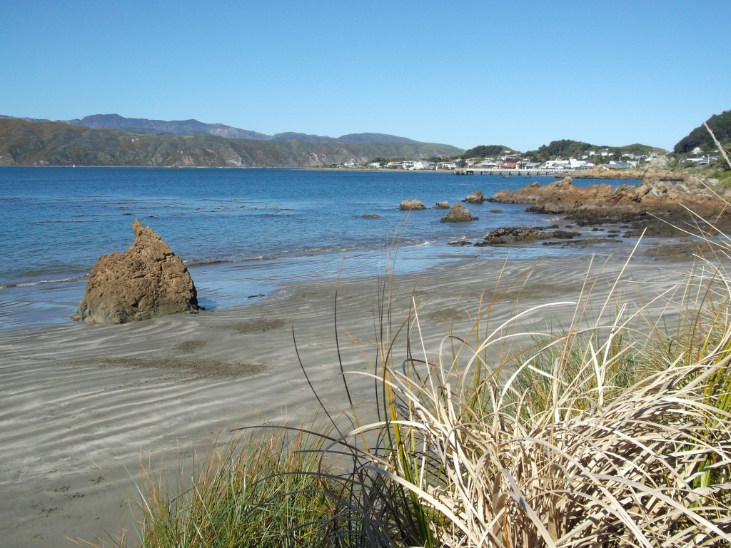 We stopped at a few places to take photos around Lyall Bay.