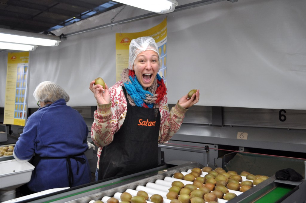 I spent a few months working in the kiwifruit industry in Te Puke to get an extension on my working holiday visa. Photo by Bobbi Lee Hitchon