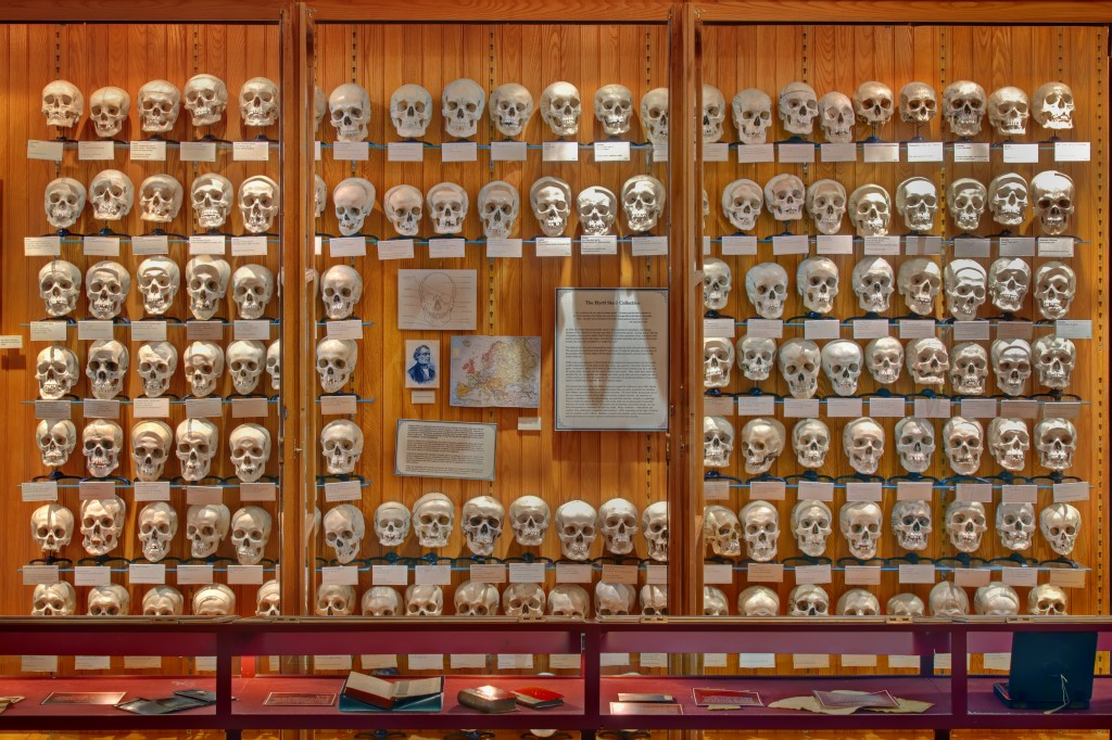 The Hyrtl Skull Collection George Widman, 2009, for the Mütter Museum of The College of Physicians of Philadelphia